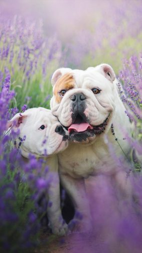 Bulldog With Puppy 4K Ultra HD Mobile Wallpaper