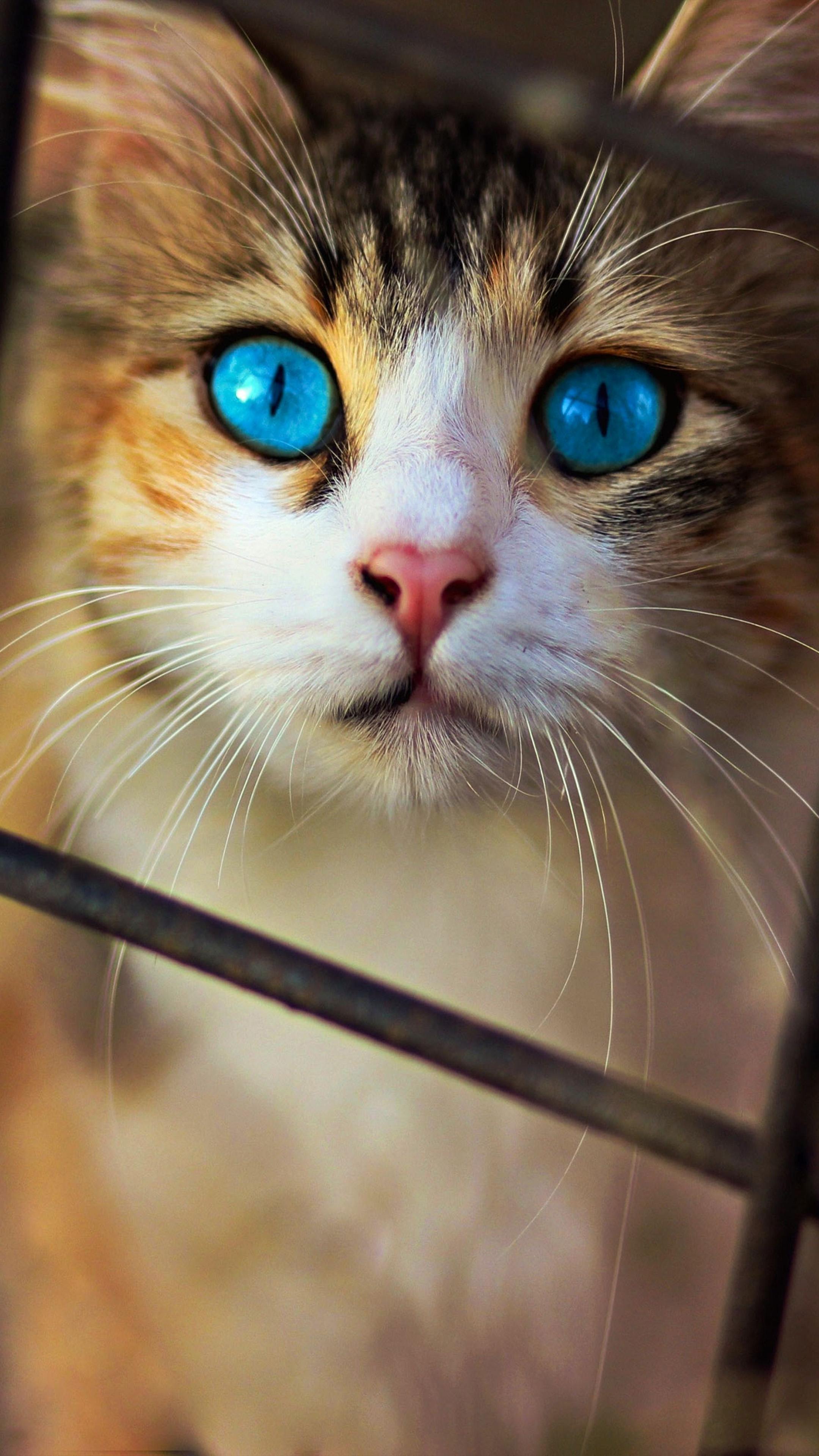Cute Cat Blue Eyes 4k Ultra Hd Mobile Wallpaper