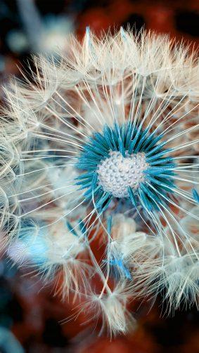 Dandelion Flower Macro Spring Blossom 4K And Ultra HD Mobile Wallpaper