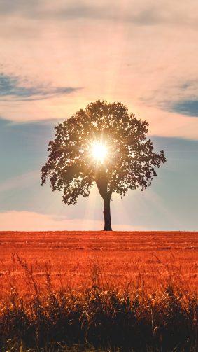 Lonely Tree Evening Fields Sunset 4K Ultra HD Mobile Wallpaper