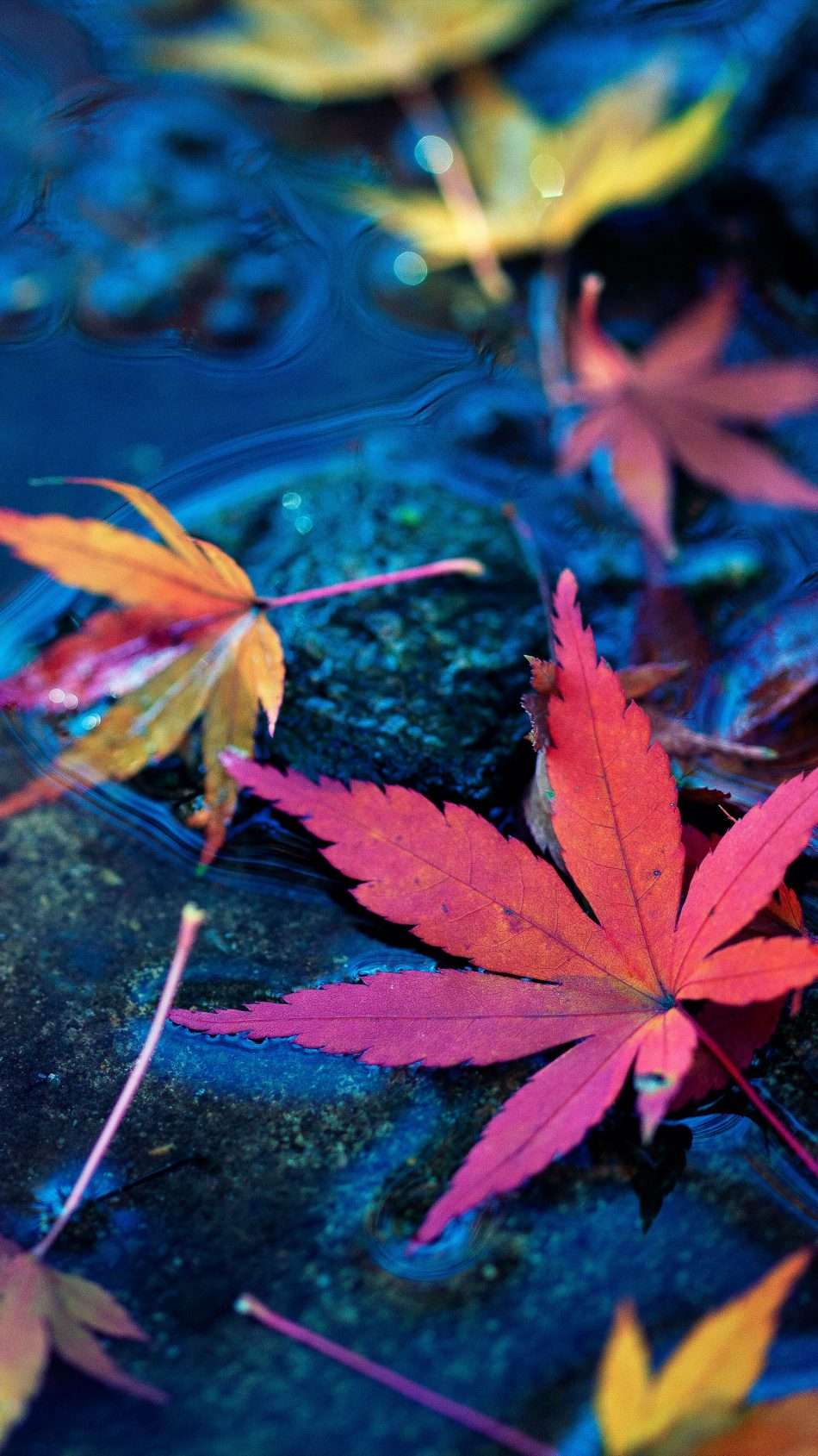 Maple Leaves Fall Autumn Water 4K Ultra HD Mobile Wallpaper