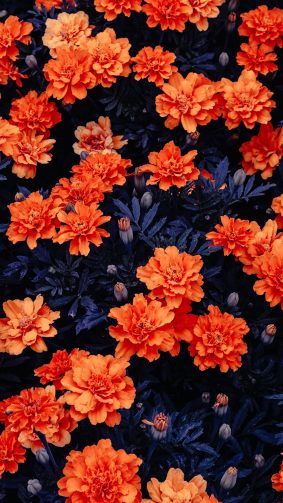 Orange Flowers Garden 4K Ultra HD Mobile Wallpaper
