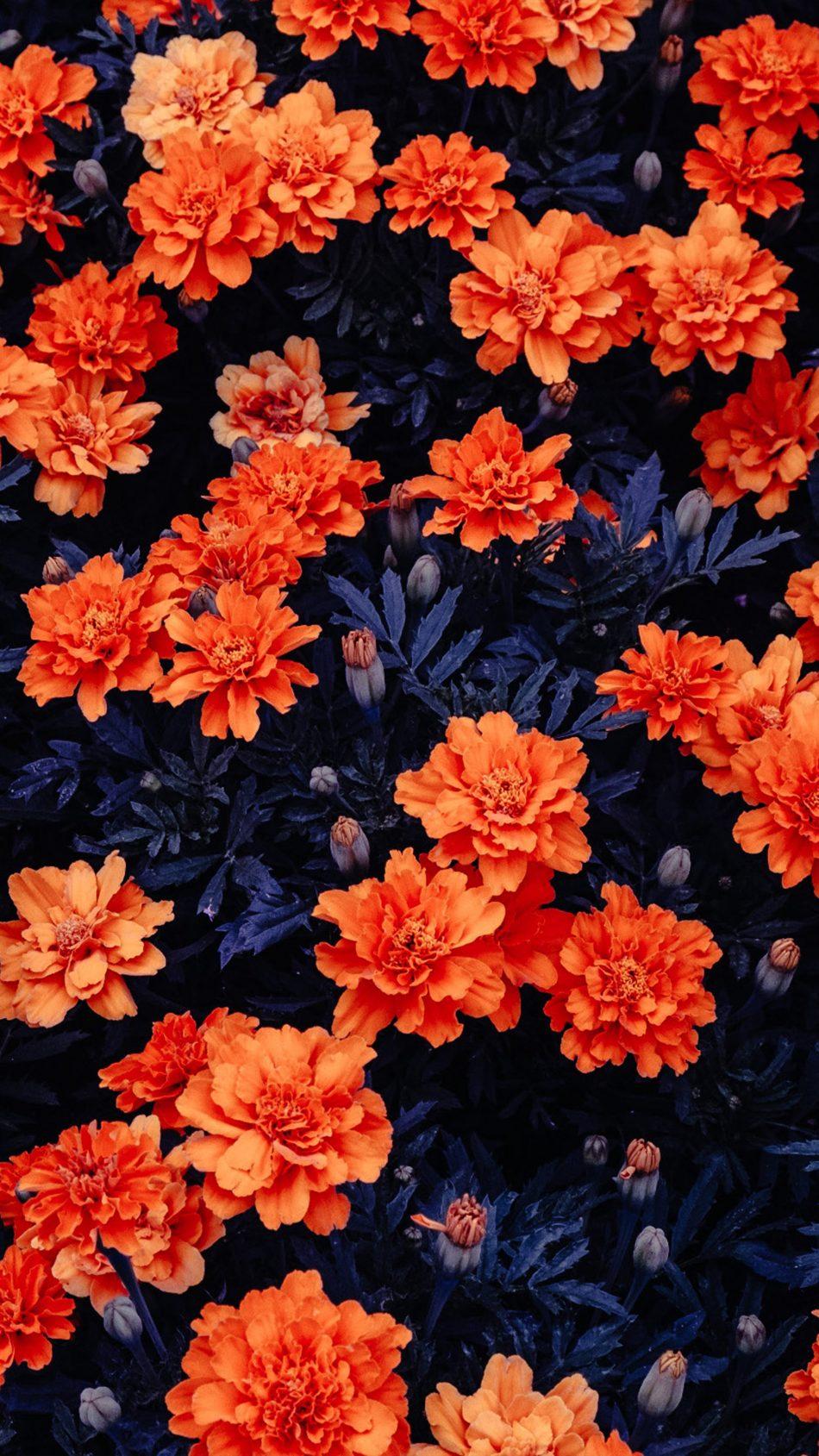 Download Orange Flowers Garden Free Pure 4K Ultra HD Mobile
