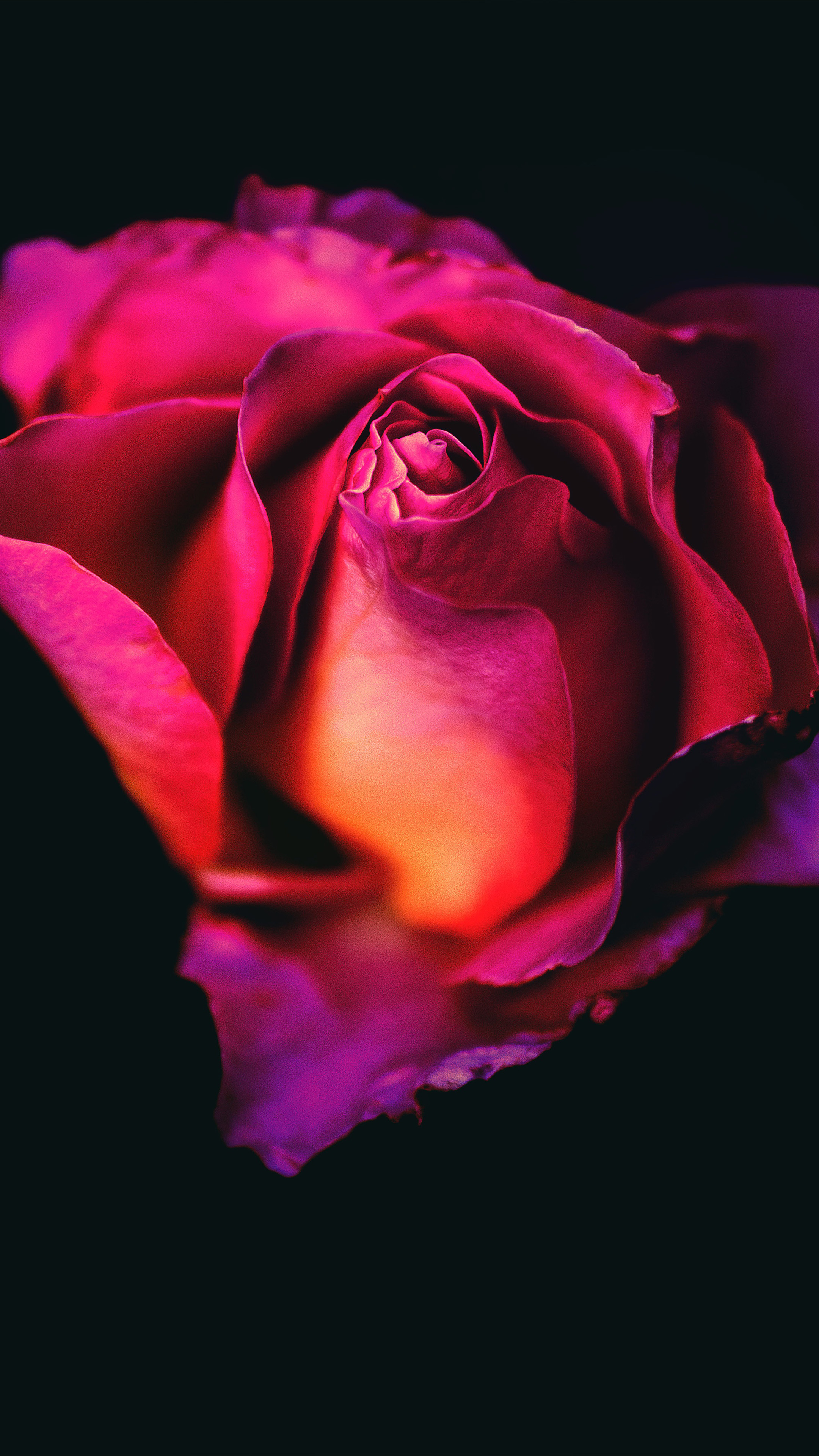 Download rose flower dark background free pure 4k ultra hd - Rose flowers wallpaper for mobile ...