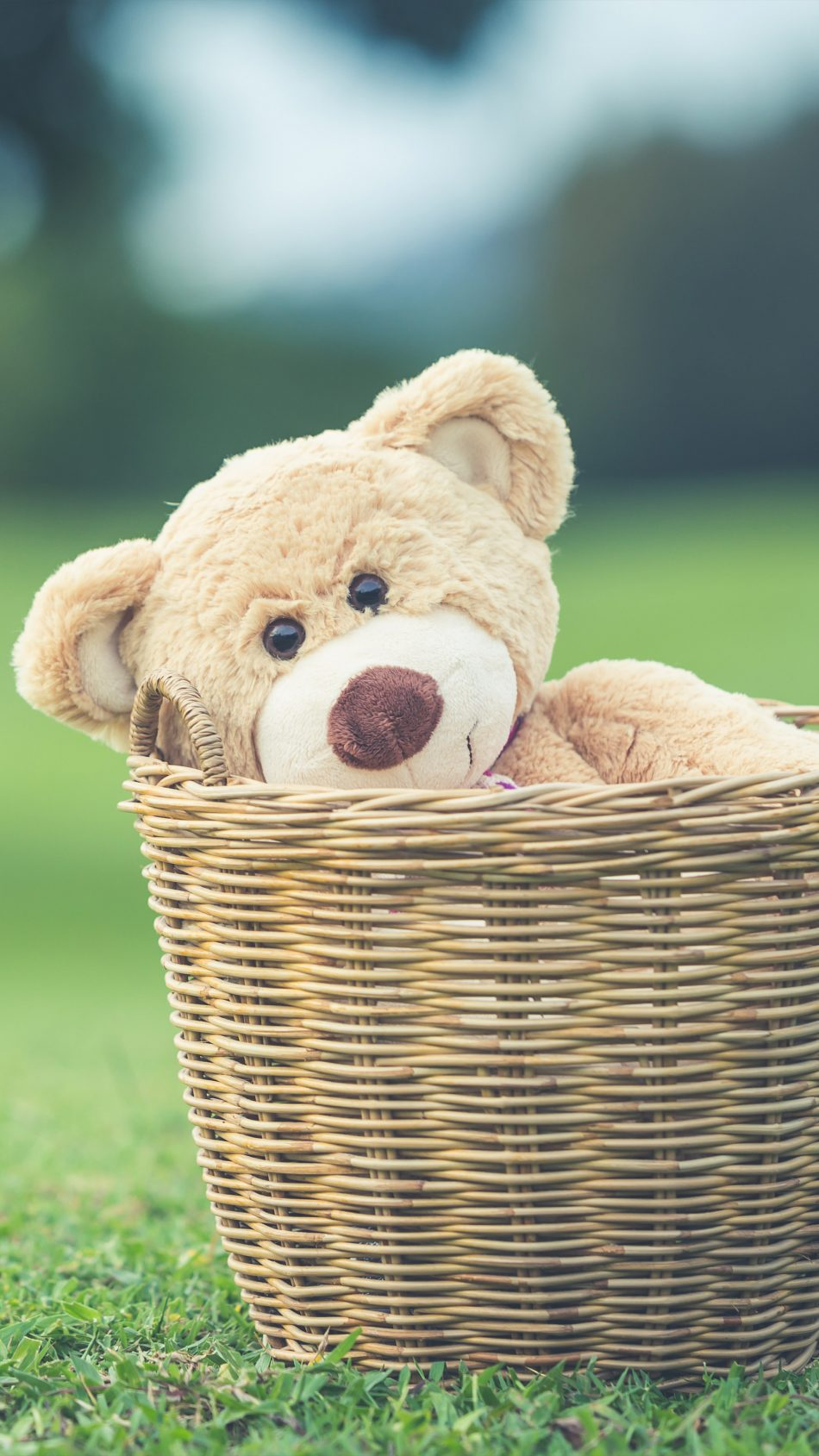 Teddy Bear Basket Playground 4K Ultra HD Mobile Wallpaper