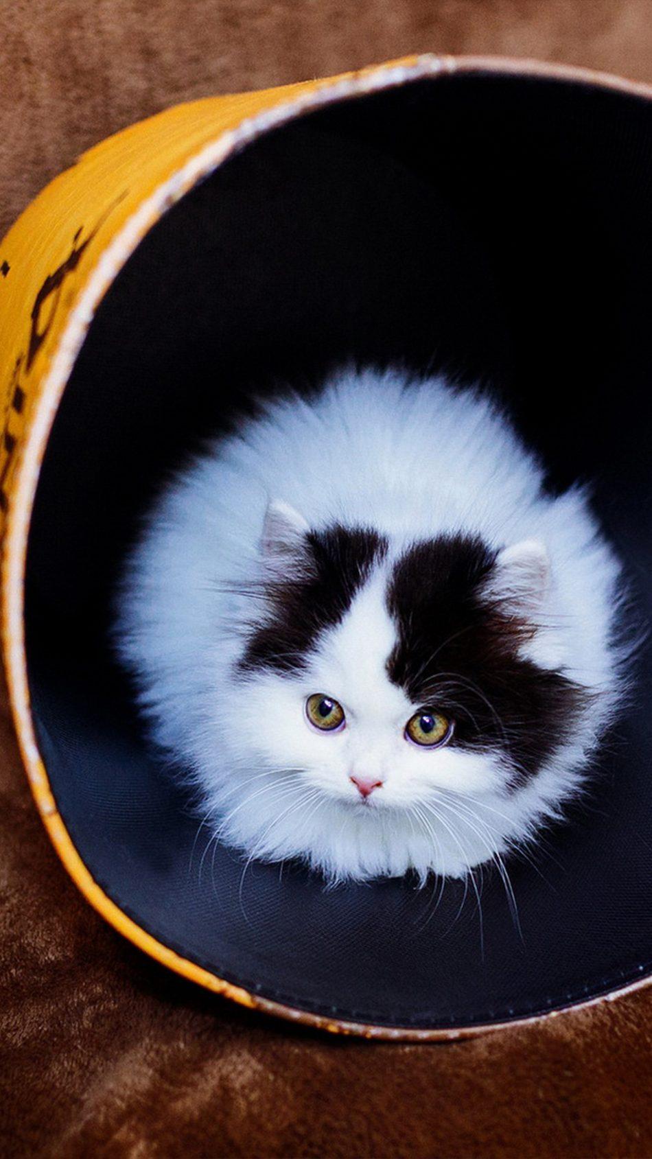 Tiny Cat Big Cup 4k Ultra Hd Mobile Wallpaper