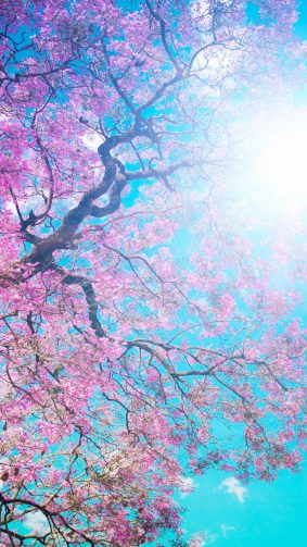 Tree Sunny Spring Day 4K Ultra HD Mobile Wallpaper