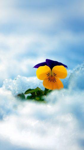 Yellow Flower Winter Snow 4K Ultra HD Mobile Wallpaper