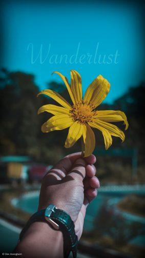 Hand Flower Morning Wanderlust 4K Ultra HD Mobile Wallpaper