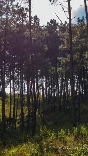 Forest Barapani Meghalaya Photography 4K Ultra HD Mobile Wallpaper