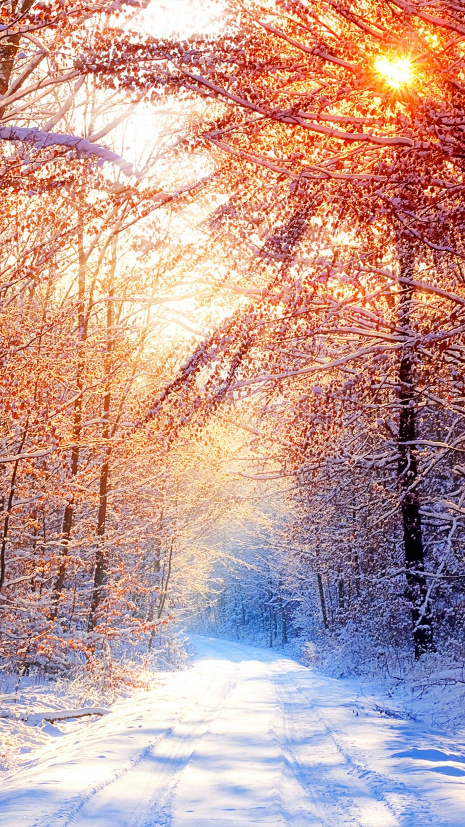Snow Trees Winter Morning 4K Ultra HD Mobile Wallpaper