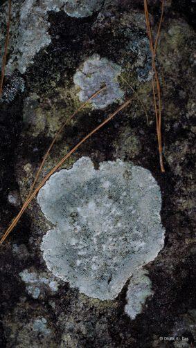 Tree Fungus Art Photography 4K Ultra HD Mobile Wallpaper