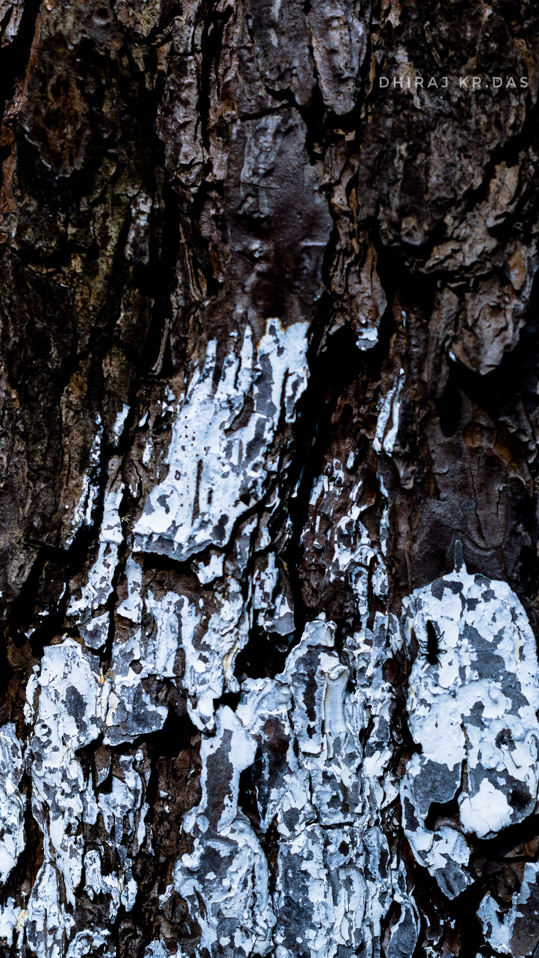 Download Tree White Paint Photography Free Pure 4K Ultra ...