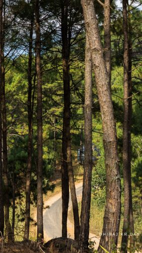 Trees Forest Road Meghalaya 4K Ultra HD Mobile Wallpaper