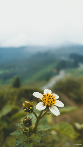 Flower Nature Landscape 4K Ultra HD Mobile Wallpaper