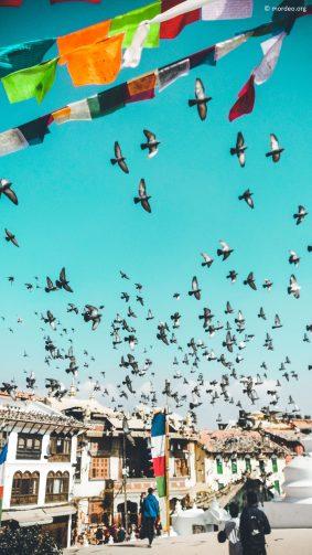 Pigeons Buddha Monastery Nepal Photography 4K Ultra HD Mobile Wallpaper