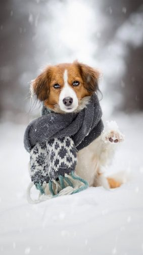 Puppy Scarf Snow Winter Ultra HD Mobile Wallpaper