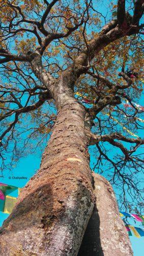 Tree Blue Sky Buddhist Flags 4K Ultra HD Mobile Wallpaper