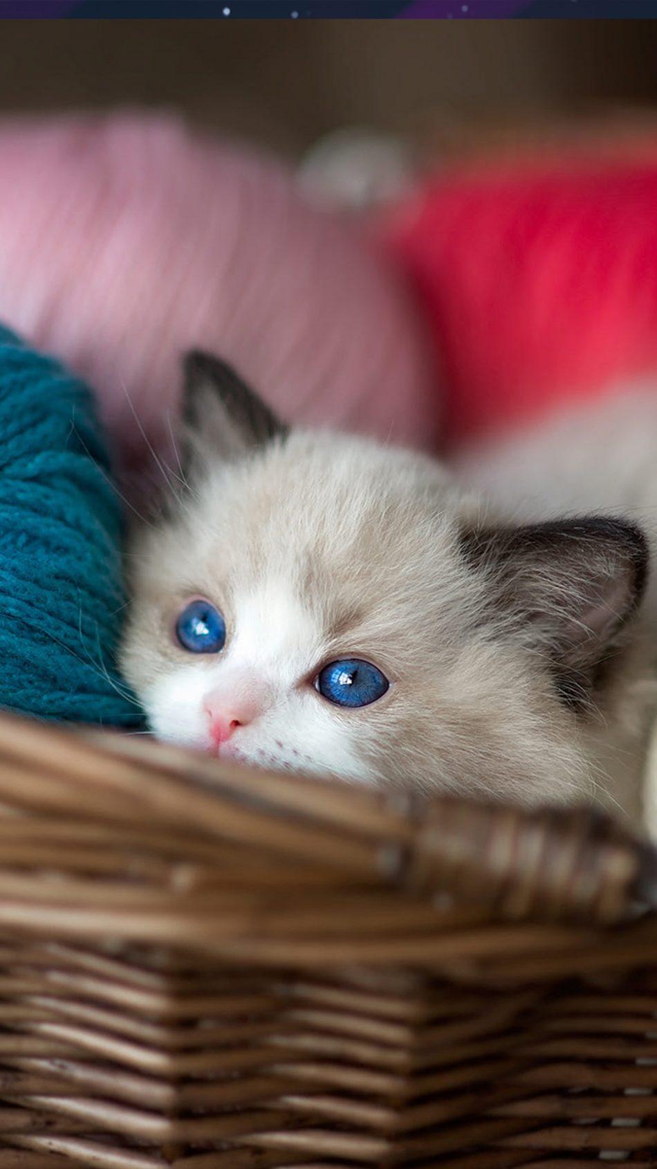 Kitten Blue Eyes Wool Balls 4K Ultra HD Mobile Wallpaper