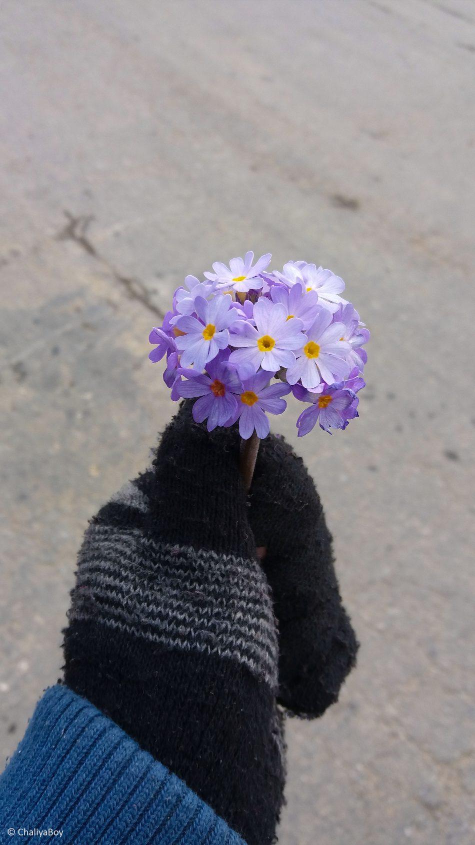 Purple Flower Hand Winter 4K Ultra HD Mobile Wallpaper