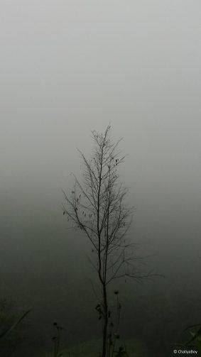 Tree Fog Rain Hills 4K Ultra HD Mobile Wallpaper