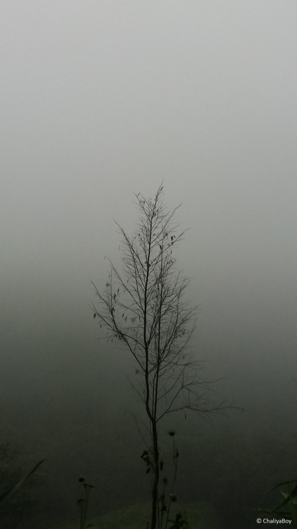 Tree Fog Rain Hills 4K Ultra HD Mobile Wallpaper