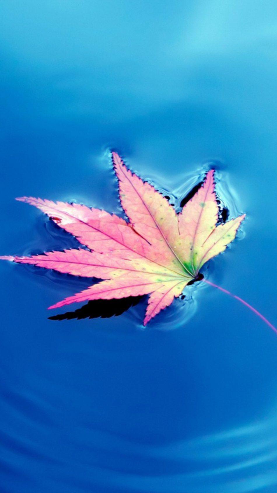 Maple Leaf Fall Water Winter 4K Ultra HD Mobile Wallpaper