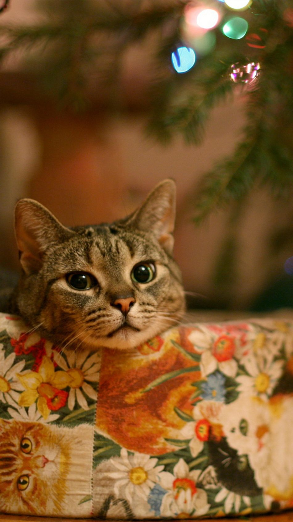 Cat Christmas Eve Celebration 4K Ultra HD Mobile Wallpaper