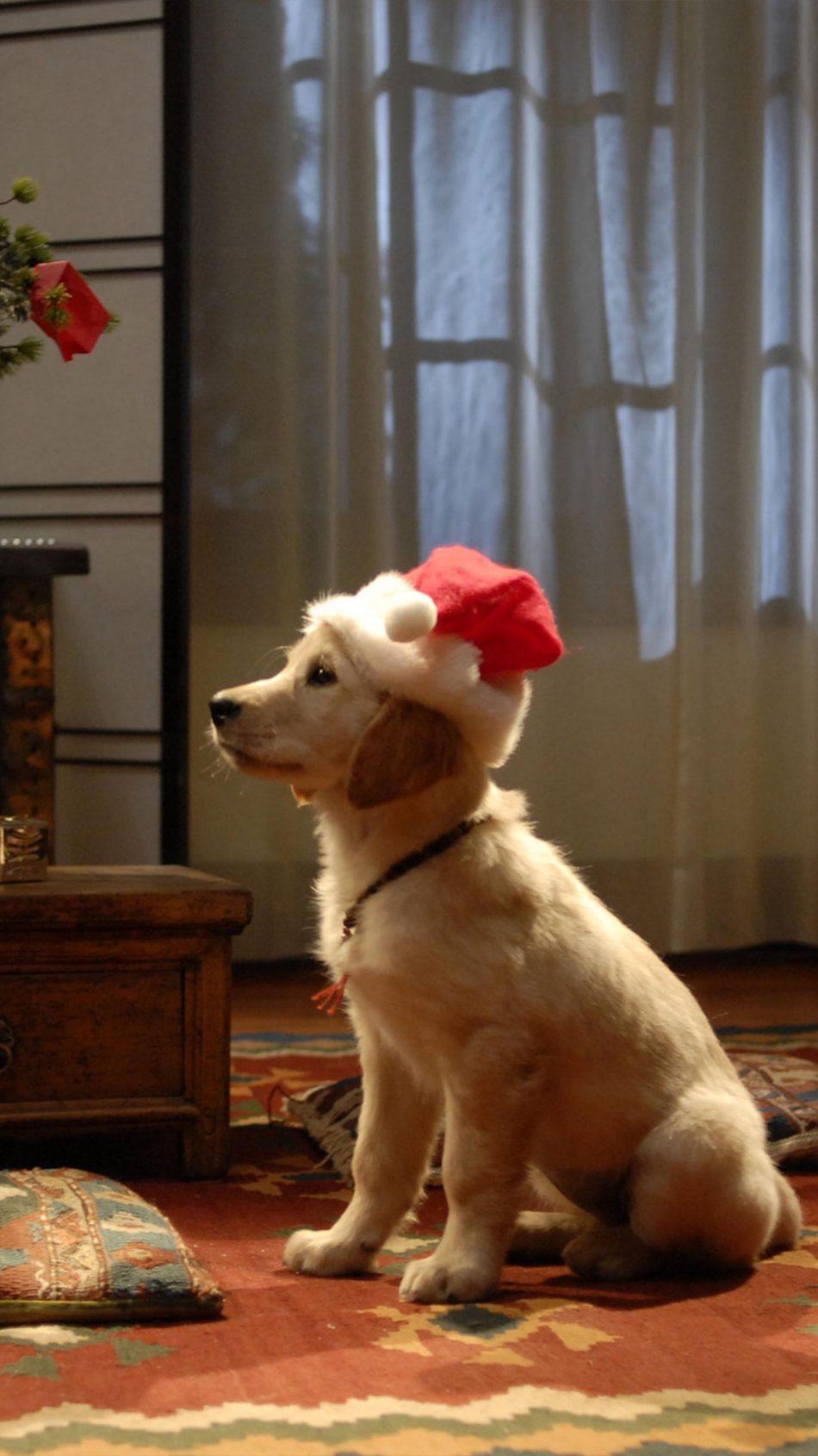 Dog Santa Hat Christmas 4K Ultra HD Mobile Wallpaper