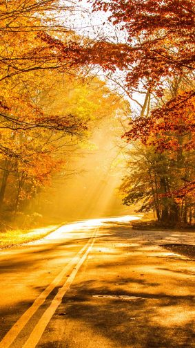 Fall Foliage Autumn Road 4K Ultra HD Mobile Wallpaper