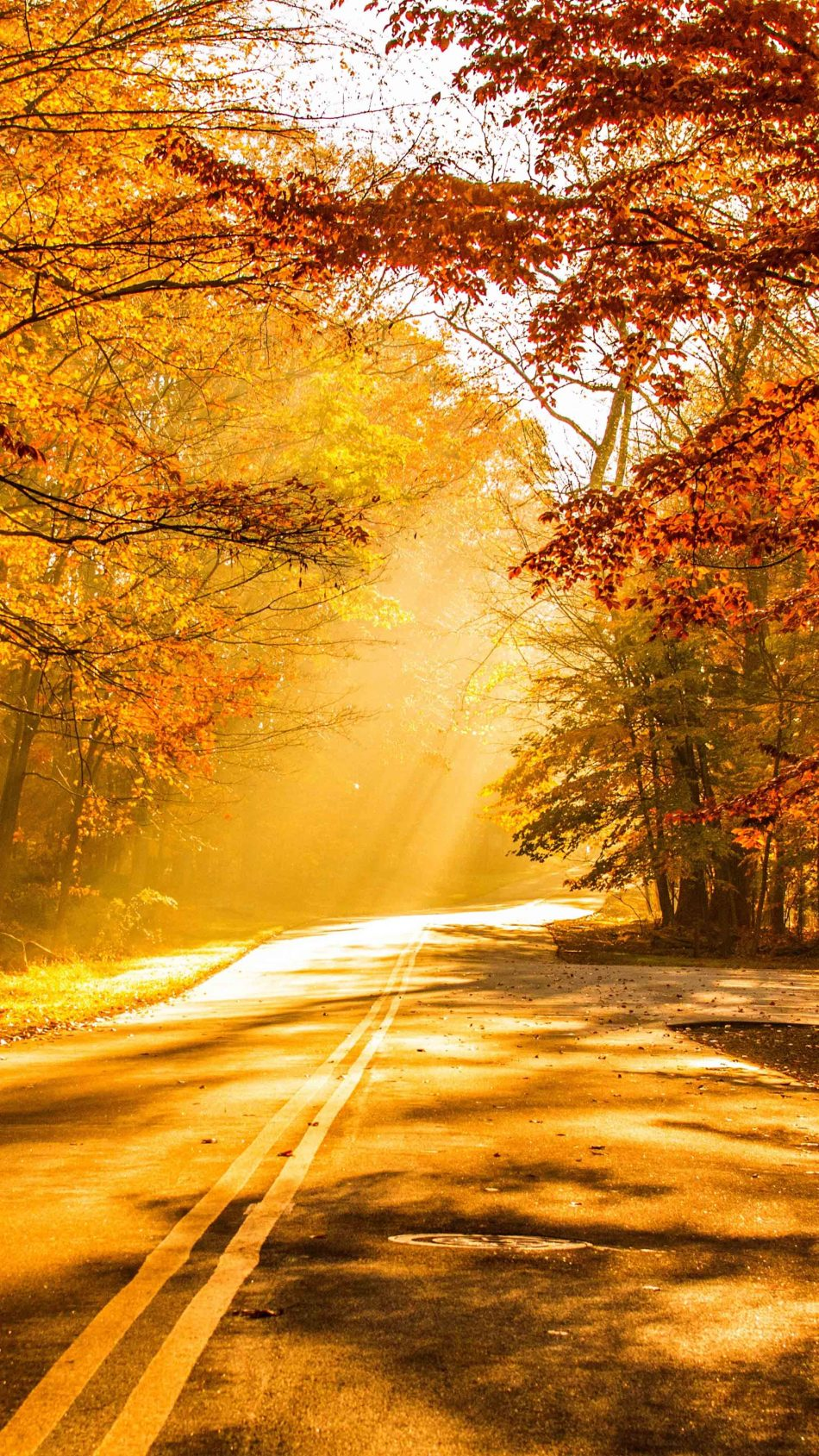 Fall Foliage Autumn Road 4K Ultra HD Mobile Wallpaper