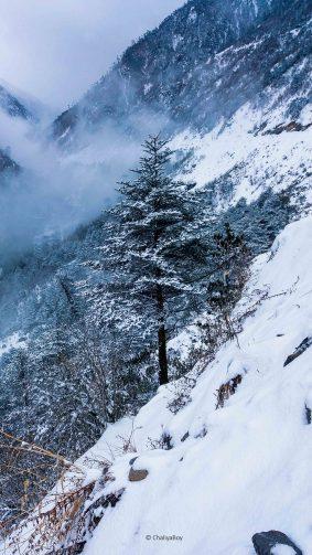 Pine Tree Winter Snow Hills 4K Ultra HD Mobile Wallpaper