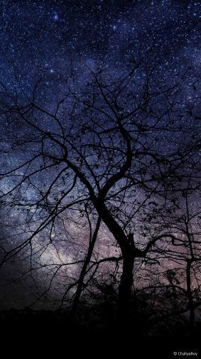 Night Tree Milky Way Photography 4K Ultra HD Mobile Wallpaper