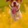 Dog In Yellow Flower Field 4K Ultra HD Mobile Wallpaper