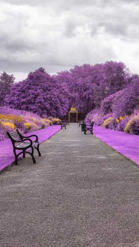 Garden Botanical Park Purple 4K Ultra HD Mobile Wallpaper