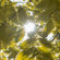 Sunny Day Tree Leaves Sunlight 4K Ultra HD Mobile Wallpaper