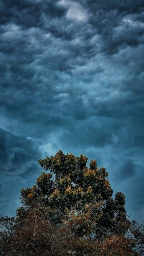 Tree Dark Cloud Extreme Weather 4K Ultra HD Mobile Wallpaper
