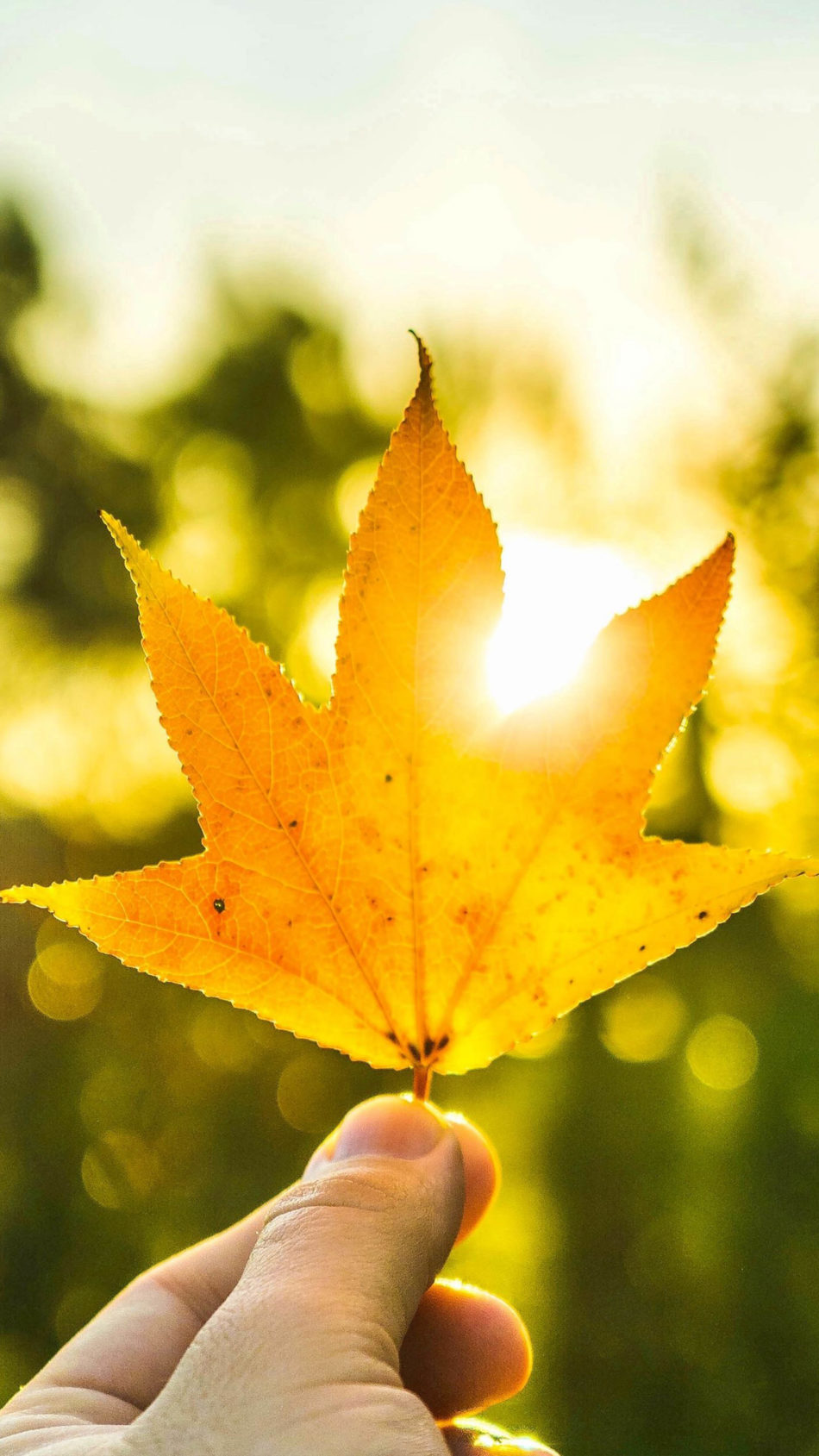Maple Leaf Hand Sun Light 4K Ultra HD Mobile Wallpaper