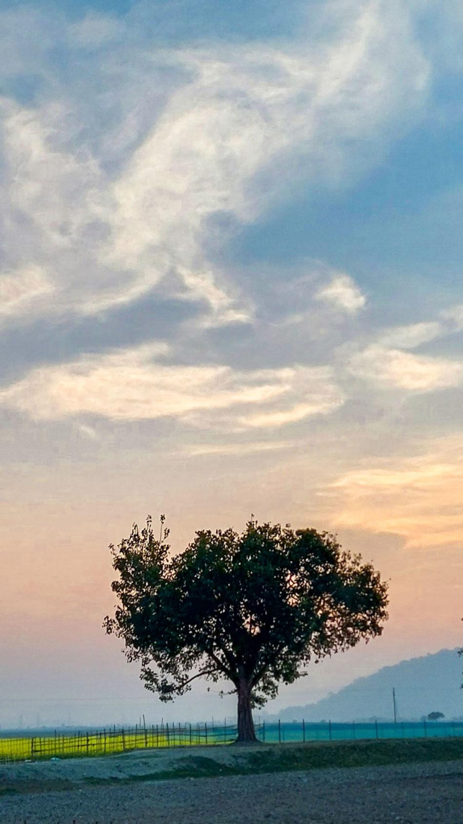 Tree Sunset Paddy Field 4K Ultra HD Mobile Wallpaper