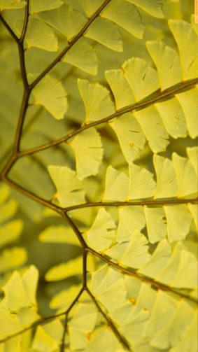 Yellow Ferns 4K Ultra HD Mobile Wallpaper