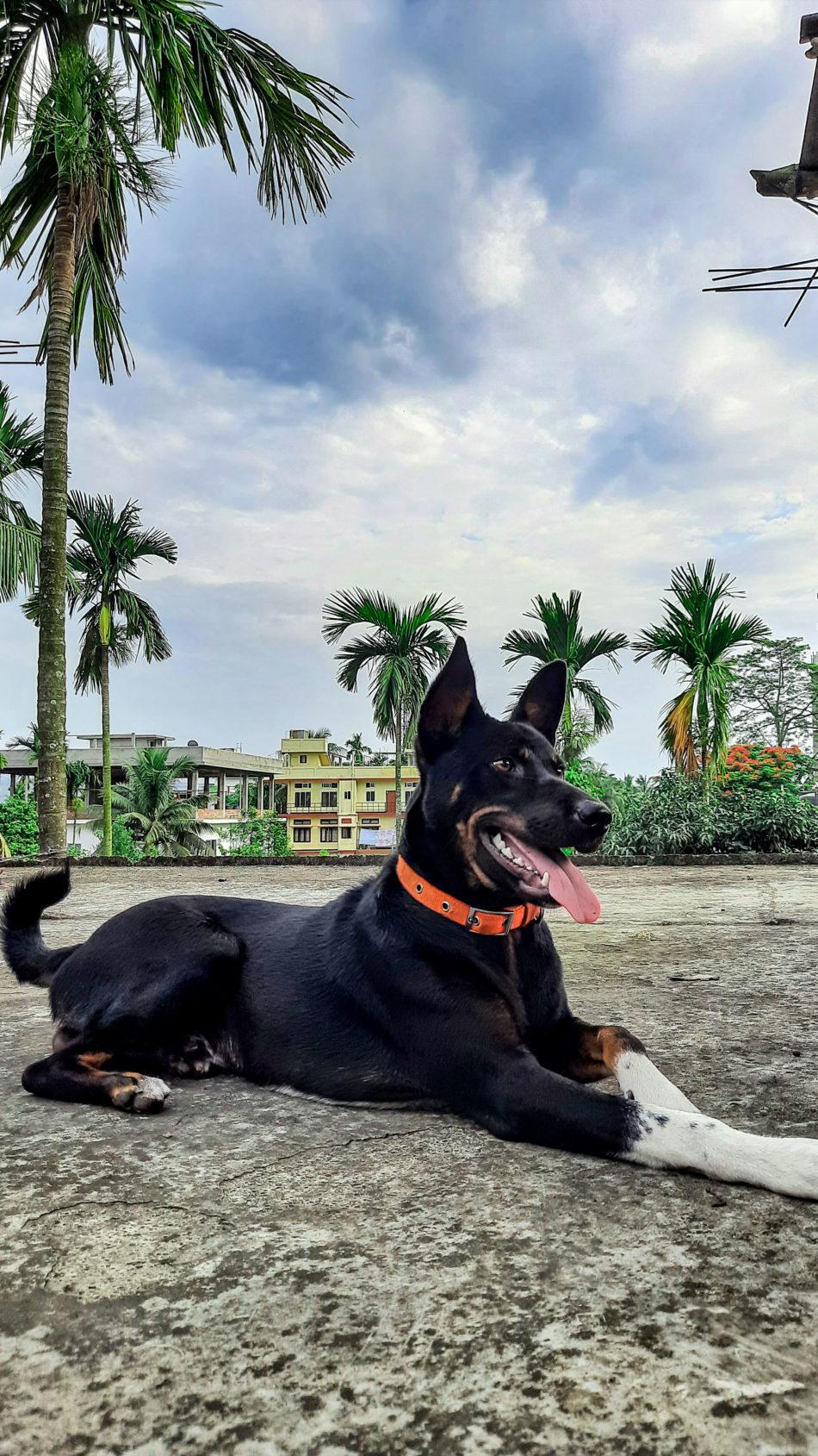 Happy Stray Dog Black 4K Ultra HD Mobile Wallpaper