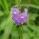 Jamaica Vervain Blue Flowers 4K Ultra HD Mobile Wallpaper