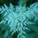 Mountain Bladderfern Leaves Green Spring 4K Ultra HD Mobile Wallpaper