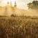 Castle Morning Sun Ray Grass 4K Ultra HD Mobile Wallpaper
