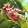 PUBG Mobile Season 19 Insectoid Skin 4K Ultra HD Mobile Wallpaper
